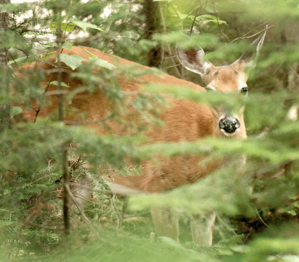 At what point during firearms season will you have best luck bagging your deer?