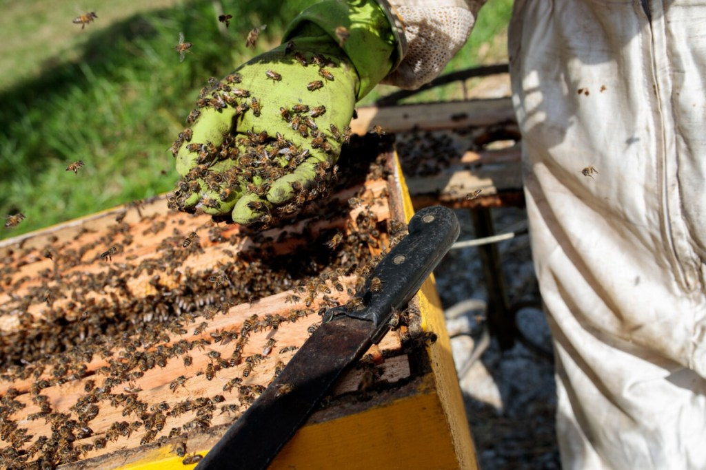 European honey bees at a beehive in Sao Roque, Brazil in July; around half a billion bees died in four of Brazil's southern states in the year's first months.