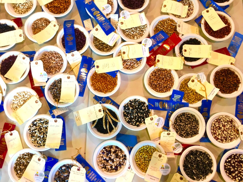 Inside the Exhibition Hall, up to 200 samples of dry beans are entered for judging each year. This year, the Common Ground Country Fair runs from Sept. 20 to 22.