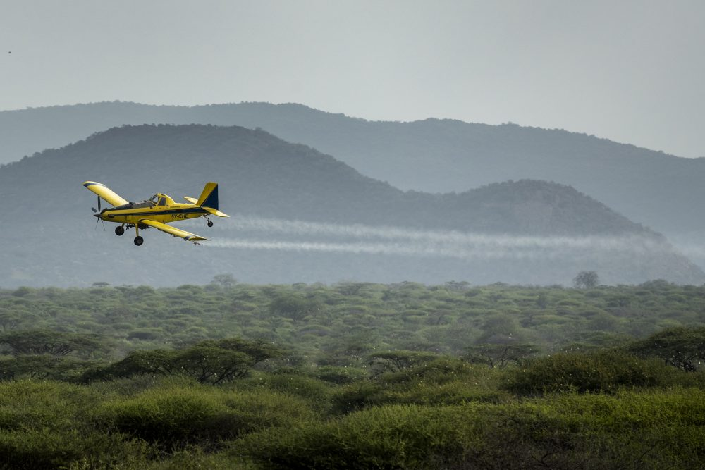 A plane spraying pesticides flies over a swarm of desert locusts Saturday in Nasuulu Conservancy, northern Kenya. As locusts by the billions descend on parts of Kenya in the worst outbreak in 70 years, small planes are flying low over affected areas to spray pesticides in what experts call the only effective control.