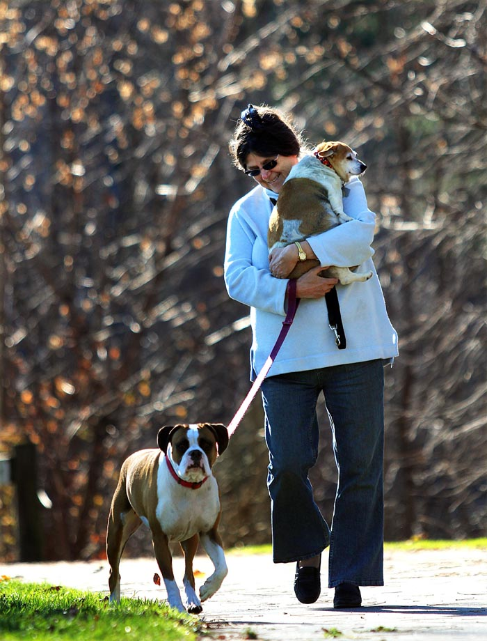 """Brenda Whitney, of Waterville, carries her 11-year-old dog, Princess, back to her car while finishing a walk along Messalonskee Stream, with her Boxer, named Brady, left, and another dog, named Little Bit (not shown), on Saturday in Waterville. """"She (Princess) can walk one way, but walking back is a little tough for her, """" said Whitney."""