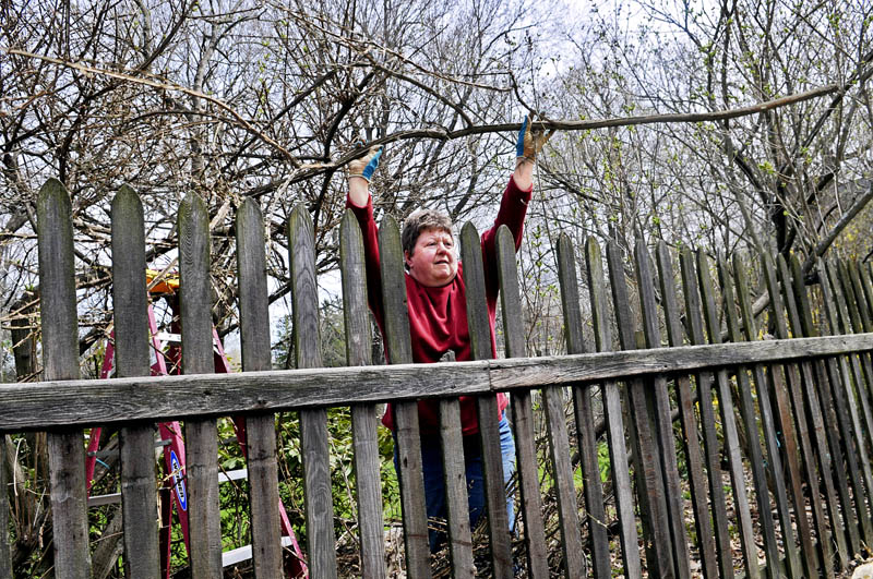 Barbara Estabrook tosses the limb of a shrub over the fence of her home Monday in Gardiner. Estabrook said she was applying the pruning skills she recently acquired during a workshop in Longfellow's Greenhouse in Manchester.