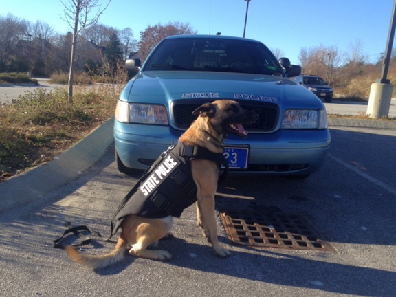 Ready for work: Winger , a 2 ½ year old Belgian Malinois, wears his new protective vest. Winger patrols in Washington and Hancock counties with Trooper Christopher Smith.