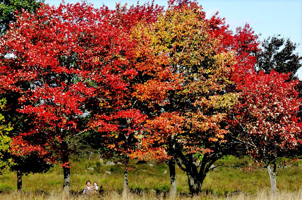 Katie Greenleaf carries her younger sister Melanie past colorful maple trees in a field in Albion with leaves turning brilliant red Tuesday, the first full day of fall.