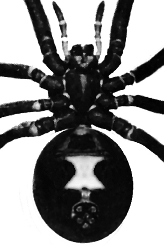 Markings on a black widow spider.