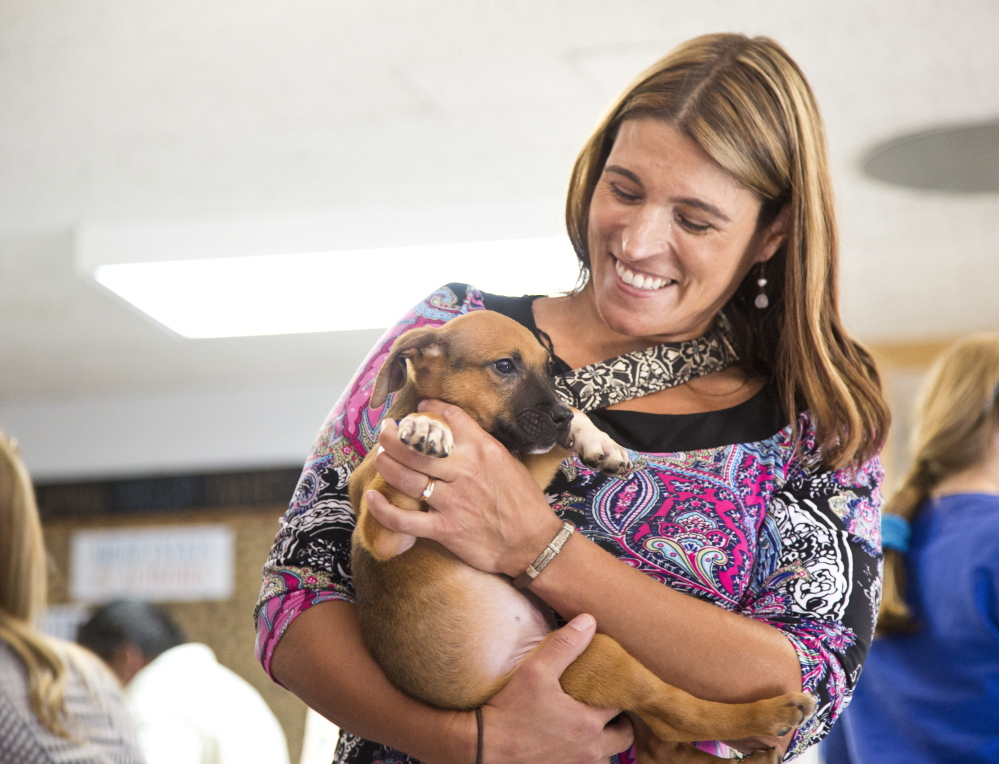 Kimberly Newman of Windham holds Bruno, one of 18 doges that were seized last week from a home in Buxton. Whitney Hayward/Staff Photographer