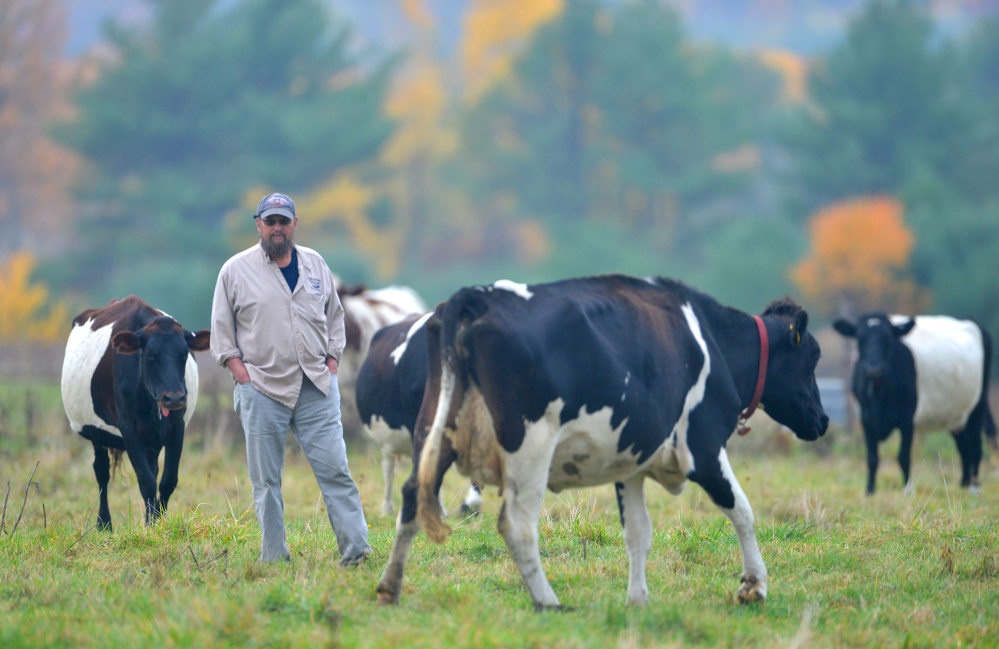 Steve Russell, a Winslow city councilman and member of the newly formed agriculture commission, walks among his field of bovines at his farm in Winslow on Oct. 21. Russell's farm is one of two Winslow applicants applying to receive relief of their assessed taxes back each year in exchange for their commitment to agricultural conservation.