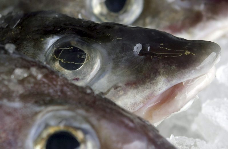 State data show commercial fishermen brought in less than 170,000 pounds of cod to Maine ports in 2016.