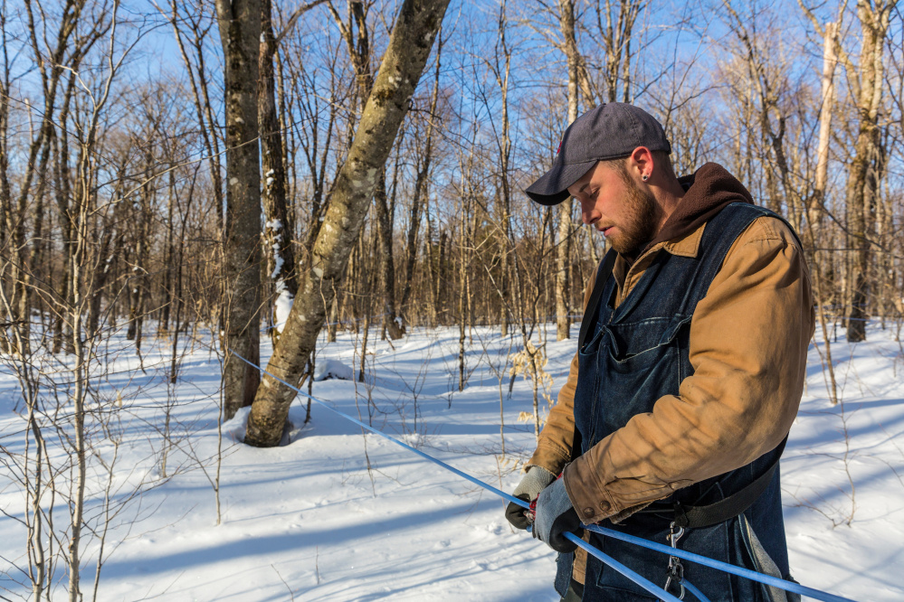 Jean Francois Faucher repairs a sap line in April 2015 on the LaRiviere sugarbush in Big Six Township. The property has more than 300,000 maple syrup taps.