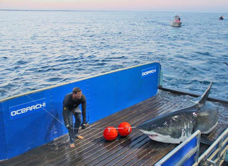 Mary Lee, a 16-foot-long great white shark, was spotted over the Memorial Day weekend along the shores of Delaware and New Jersey.