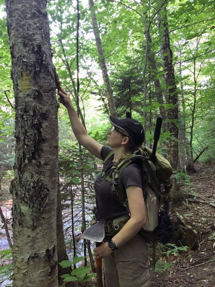 Sally Gorrill, of Gray, a captain in the U.S. Army, removes unauthorized markings from a tree along a trail in a wilderness area of the White Mountain National Forest in New Hampshire this month. Several soldiers looking to transition to a new career are spending the summer in the forest as part of an internship.