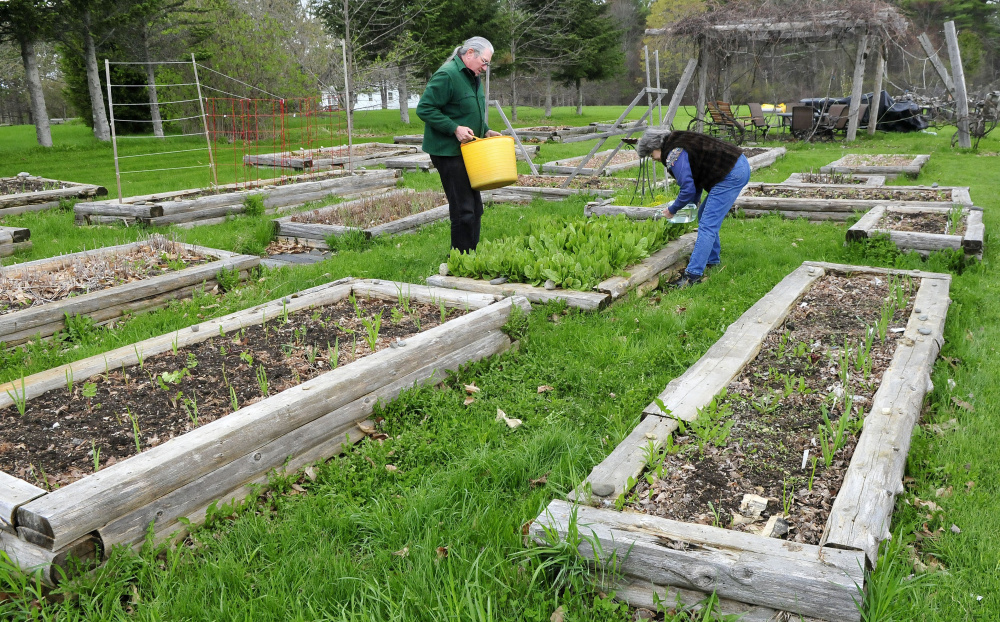 Phil Frizzell and his wife, Connie Bellett, water growing vegetables in the Community Garden they started May 10 in Palermo. The couple hauled the water from the Windsor Town Office, 8 miles away. The Malcolm Glidden American Legion Post 163 has refused to connect a water supply to the rental space.