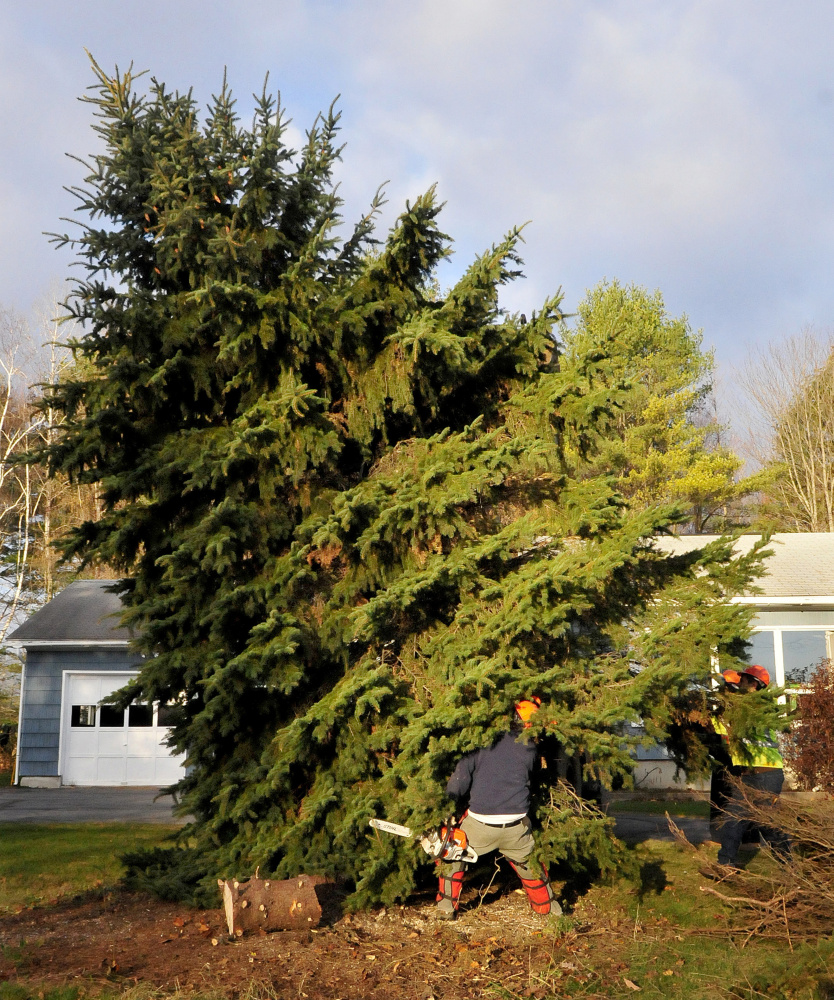Mike Folsom, of the Waterville Public Works Department, backs out from under a spruce tree he cut as it is lifted onto a trailer Monday at the home of Joe Lemieux in Fairfield. Lemieux donated the tree to the city of Waterville for Christmas.