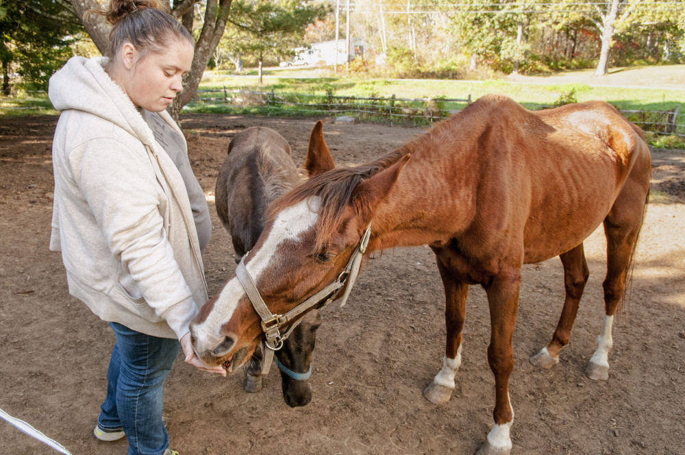 Kelsey Radley feeds an apple to her horse Zin on Oct. 13 in Pittston while Pocket the mule, center, waits for an apple.