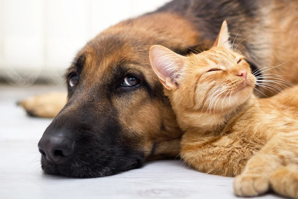 """Dogs have about twice as many neurons as cats, according to Herculano-Houzel, author of a book about brains called """"The Human Advantage."""" But wait: The average dog is larger than the average cat. Isn't it a given that dogs would have larger brains and therefore more neurons?"""