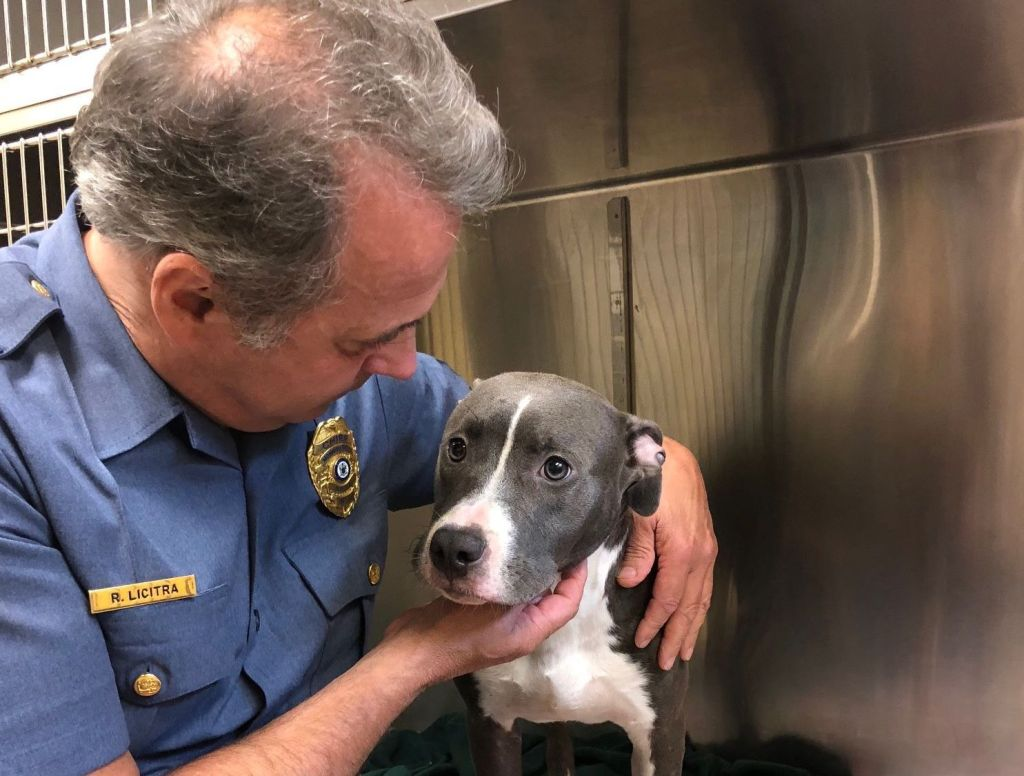 This young pit bull was rescued by a passerby after being caged and left to drown in the tide in New Jersey.