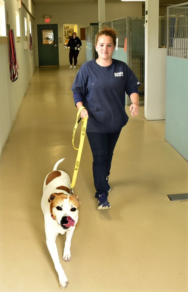 Ashley Marchind takes a dog out for a walk on Thursday at the Humane Society Waterville Area shelter.