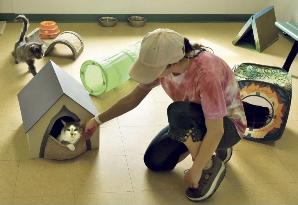 Ashley Bowring plays with cats Thursday at the Humane Society Waterville Area shelter.