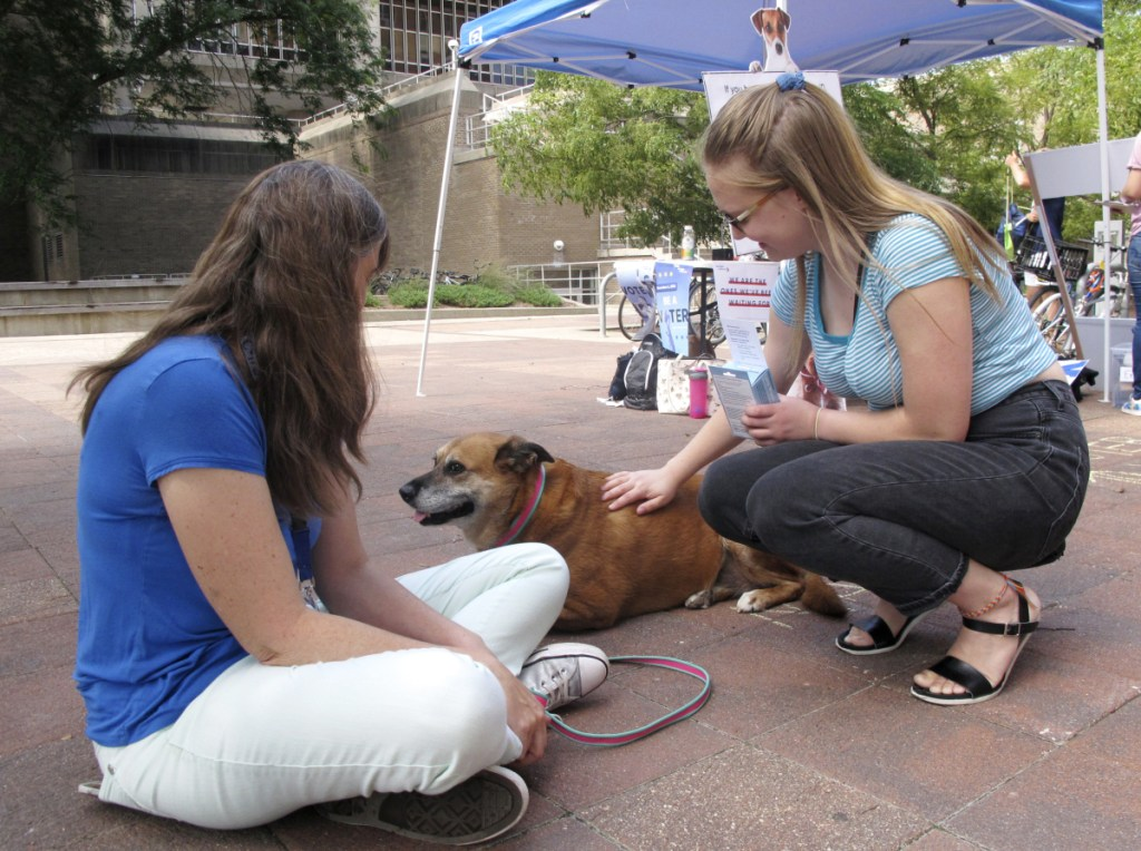 """University of Wisconsin junior Grace Austin, right, visits Maggie, a therapy dog, at a voter registration event in Madison, Wis. Austin wound up registering to vote. """"If we all vote, we can make a change,"""" she said."""