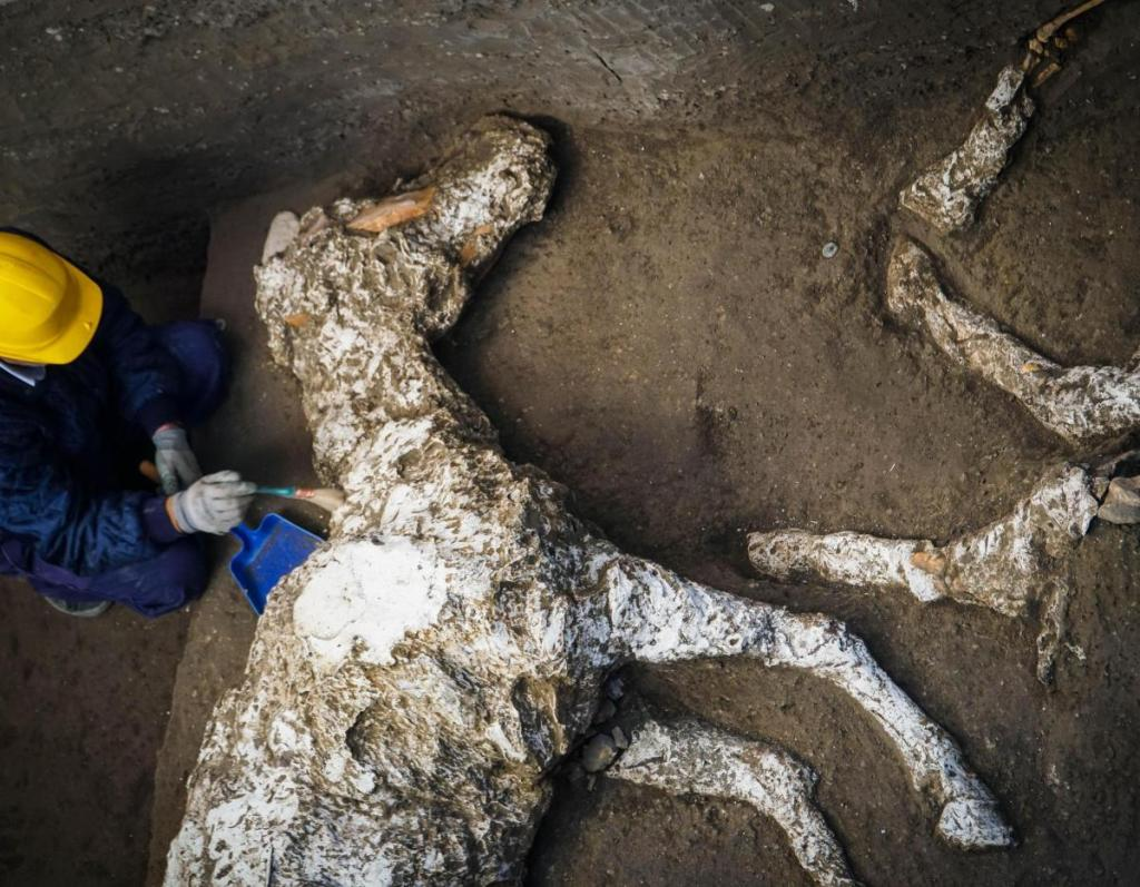 An archaeologist inspects the remains of a petrified horse skeleton at the Pompeii archaeological site in Italy.