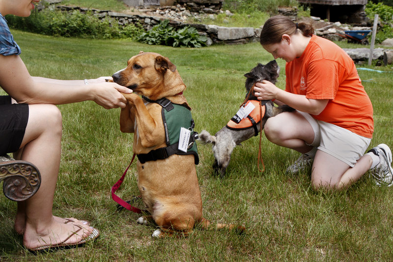 Mutts With A Mission cofounder Brooke Corson, right, and dog raiser Moriah Delisle train potential service dogs for veterans Friday in North Berwick.