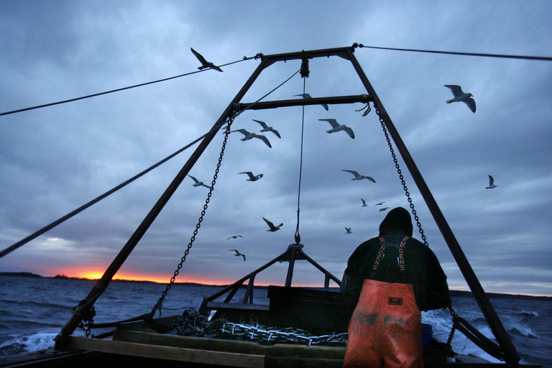 Gulls seeking scraps follow a fishing boat as sternman Josh Gatto shucks scallops on the trip back to shore off Harpswell on Dec. 17, the first day of Maine's scallop season, which will run through March.