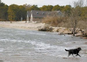 A DOG frolics in the water as the sea creeps close to a bath house at Popham Beach State Park in Phippsburg at high tide.