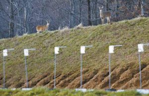 DEER ROAM ATOP a berm surrounding the shooting range at the FBI academy in Quantico, Va., in December. The 547-acre FBI academy, where some of the nation's best marksmen fire off more than 1 million bullets every month, happens to be one of the safest places for deer during hunting season.