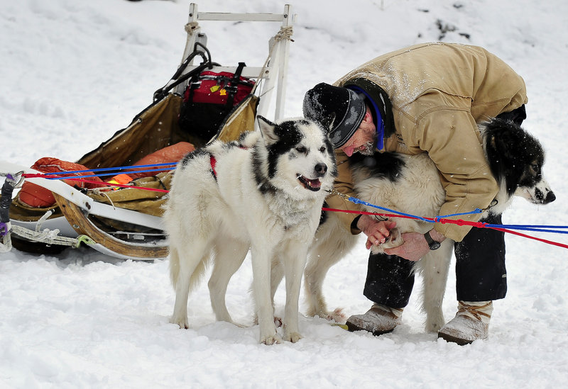 Stephen Madera of Abbot cleans the snowballs from between the toes of his sled dog Little Bug, right, and applies a protective ointment as Roy stands patiently by at the Mushers Bowl.