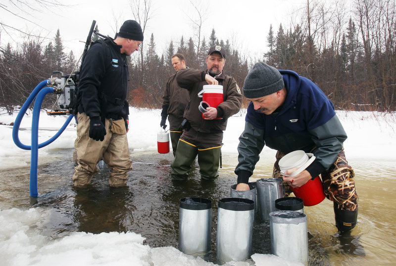 Paul Christman, a biologist with the Department of Marine Resources in Hallowell, places salmon eggs in a tributary of the Sandy River in Avon. With Christman are, from left, Jed Wright, with the Gulf of Maine Coastal Program, Craig Knights and Chris Domina, with U.S. Fish and Wildlife.