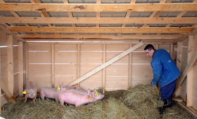 Somerset jail inmates raising pigs - Portland Press Herald