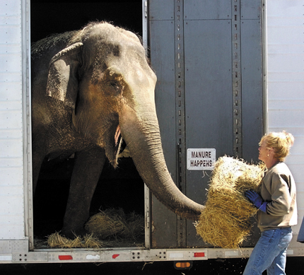 Cora, a 47-year-old elephant, and her owner Cindy Morris, have previously been part of the Shriner Circus at the Augusta Civic Center. morris elephant augusta circus feature