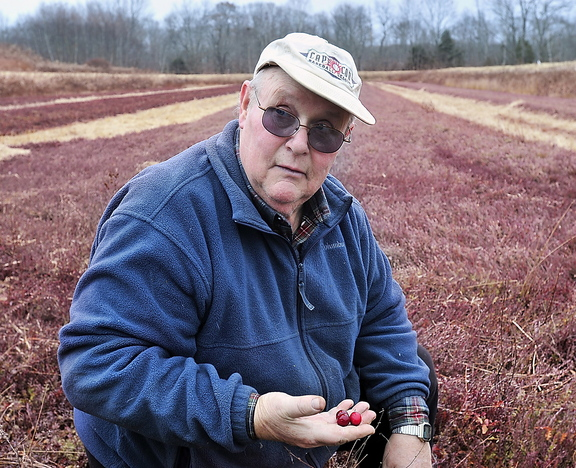David Popp of Popp Farm in Dresden holds a few cranberries from one of his bogs. He refused to harvest most of his crop because of the low market price.