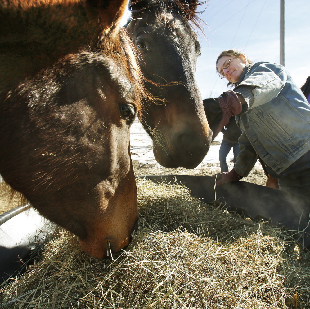 Squidgy and Graduate are two of the luckier thoroughbreds who are among four getting tender loving care from Elizabeth Dickerson at Northstar Horse Rescue.