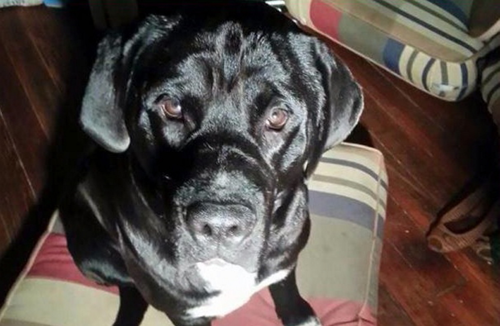 A traveling musician from Portland says a police officer killed his dog Arzy in a Louisiana newspaper's parking lot Monday.
