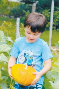 BRADEN COSTELLO, 5, grandson of Bruce and Maureen Langford of Brunswick, harvests a pumpkin from his grammy's yard in September 2013.