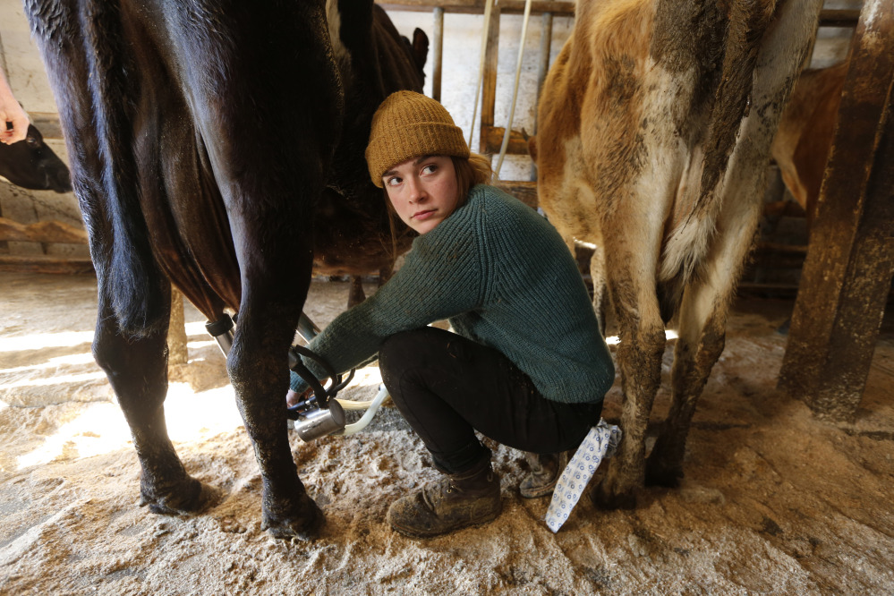 Maine dairy farmers divided on raw milk sales restrictions - Portland