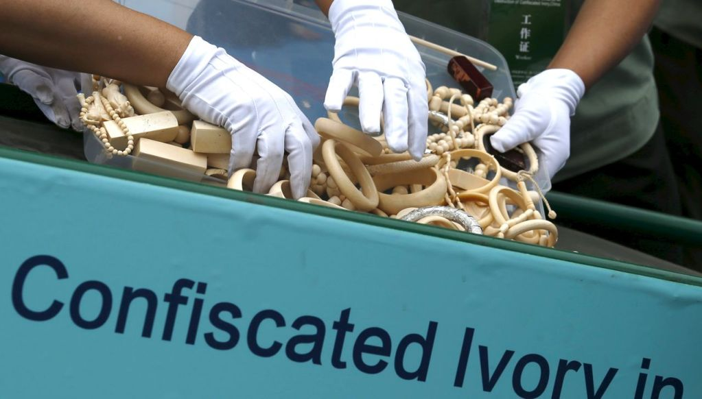 Government officials place ivory products on a conveyor belt to a crusher at a confiscated ivory destruction ceremony in Beijing, on May 29, 2015. The Chinese government destroyed 660 kilograms of confiscated ivory on at the event co-hosted by China's State Forestry Administration and the General Administration of Customs of China. Reuters