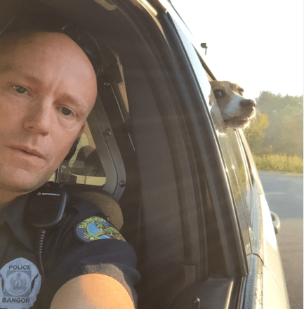 Officer Eddie Mercier took a selfie with the dog, who had been found and captured, sitting in the backseat of a cop car and poking his head out the window. Bangor Police Department photo