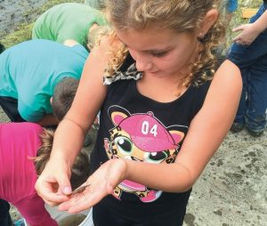 EVA WILLIAMS, a fourth-grade student at North Yarmouth Academy, handles a crayfish found during a field ecology session held Tuesday in Bowdoinham.