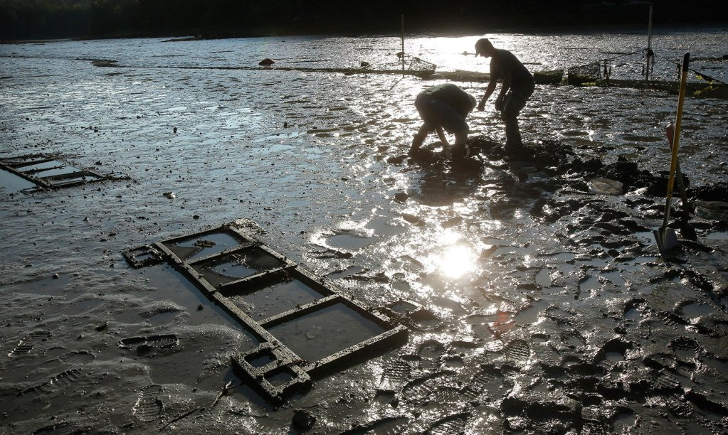 Mick Devin, a Newcastle marine biologist and Dana Morse, an extension associate with Maine Sea Grant and the University of Maine Cooperative Extension, place razor clams into a test area at Lowe's Cove near the Darling Marine Center in 2015.