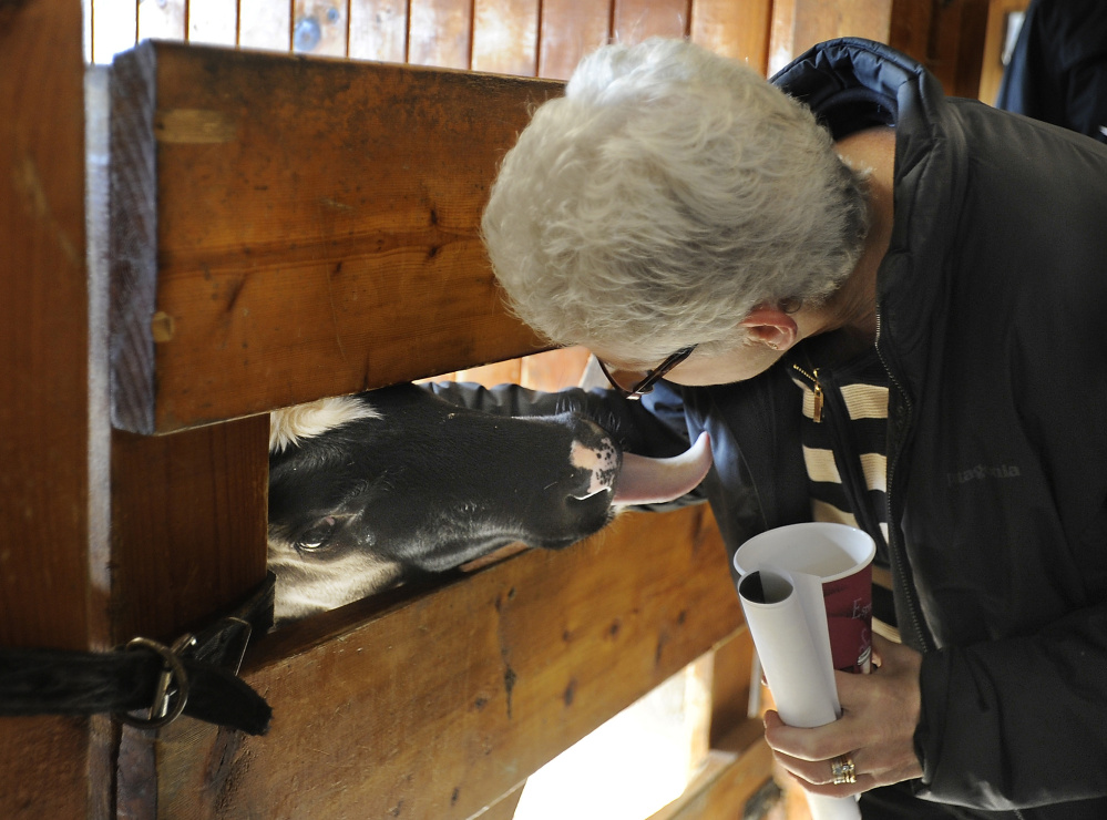 Gina McCarthy, the top administrator of the U.S. Environmental Protection Agency, gets attention from one of several calves who eyes her coffee as she tours Smiling Hill Farm in Westbrook on Monday.