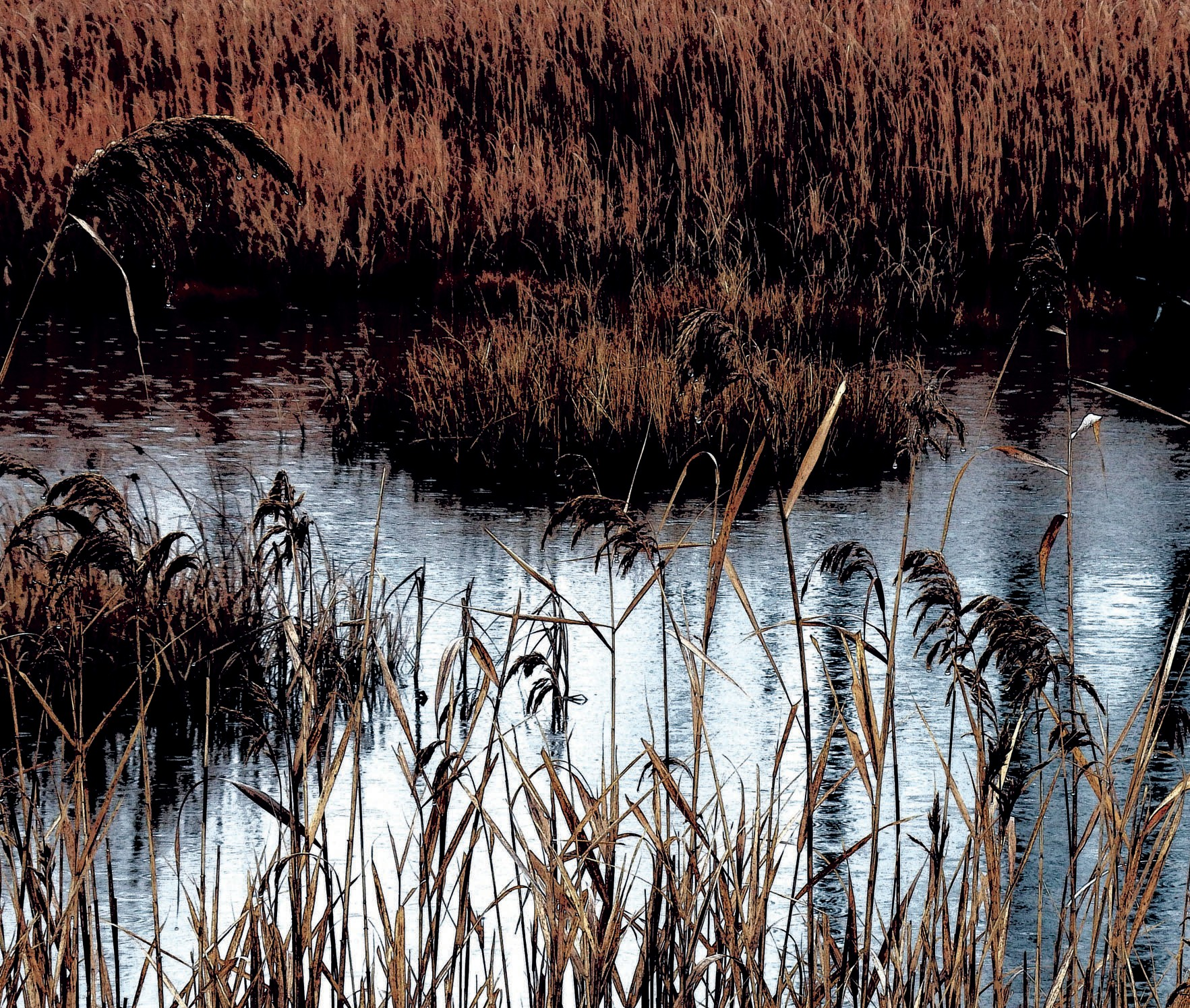 Pictured is a wetlands scene in Wells on Wednesday.