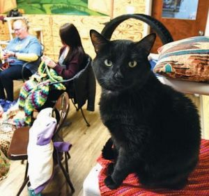NANCY ERVIN KNITS and Amanda Hoot crochets in the background while one of the residents of the cat room at the Humane Society of Carroll County takes in the activities.