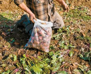 TIM LIBBY harvests beets at Veggies For All in Unity