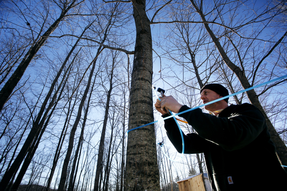 """Ashley Gerry, 40, runs sap lines Tuesday at his Maple Hill Sugar House in Newfield. """"I'm generally one of the first in southern Maine to make some syrup,"""" says Gerry, president of the Southern Maine Maple Sugarmakers Association. """"But even for me, this is pretty early."""""""
