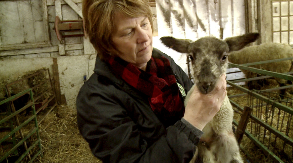 Lisa Webster, who owns North Star Sheep Farm with her husband, Phillip, holds a lamb in one of the barns where pregnant ewes wait to give birth. Lambing season is a round-the-clock job for the Websters and their eight-person crew.