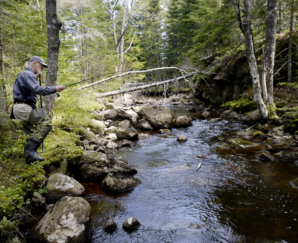 Randy Clark of Dresden hopes that's a salter – also known as a sea-run brook trout – at the end of his line as he fishes the Schoodic Peninsula as part of the Coastal Stream Survey Project.