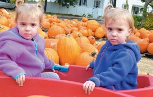SCARLETT, left, and Josephine Bonn, 2-year-old twins from Brunswick, take their pumpkin perusing seriously on Thursday in Topsham.