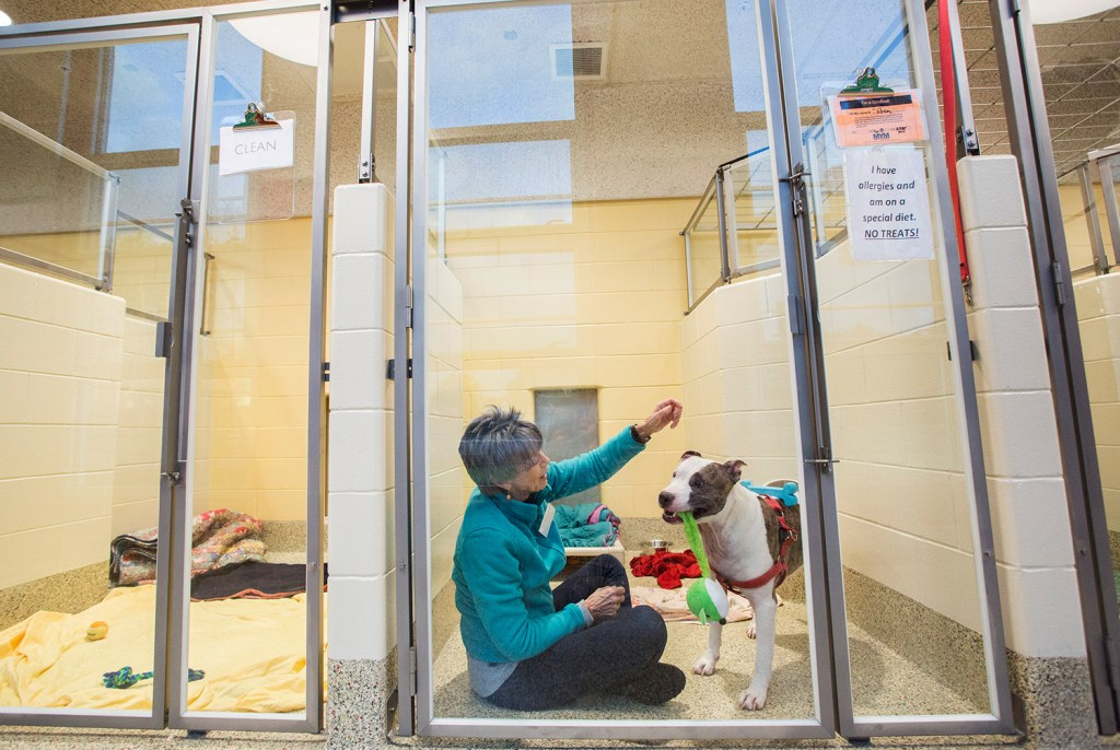 Animal Refuge League in Westbrook opens shelter with lots of